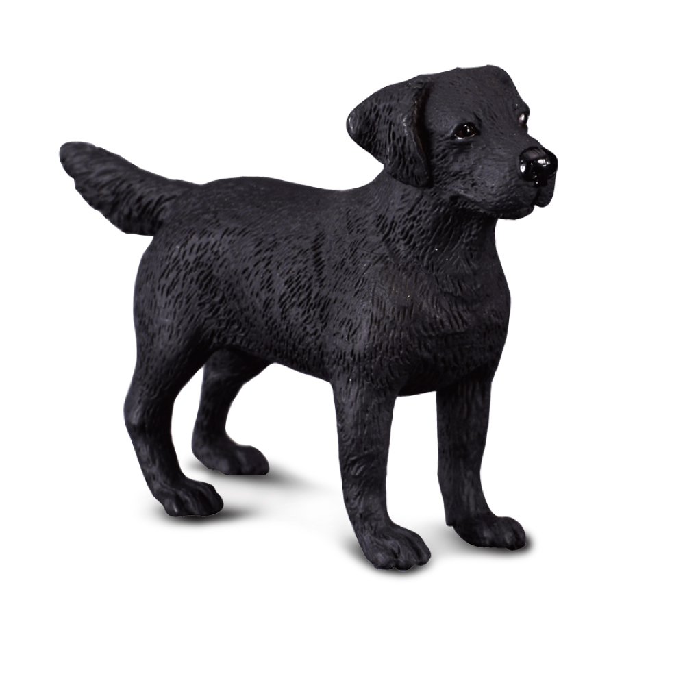 DYR COL STR M LABRADOR RETRIEVER